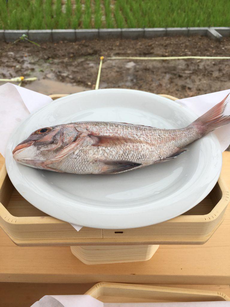 地鎮祭お供え:魚